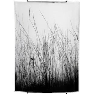 BLACK GRASS 3 5651